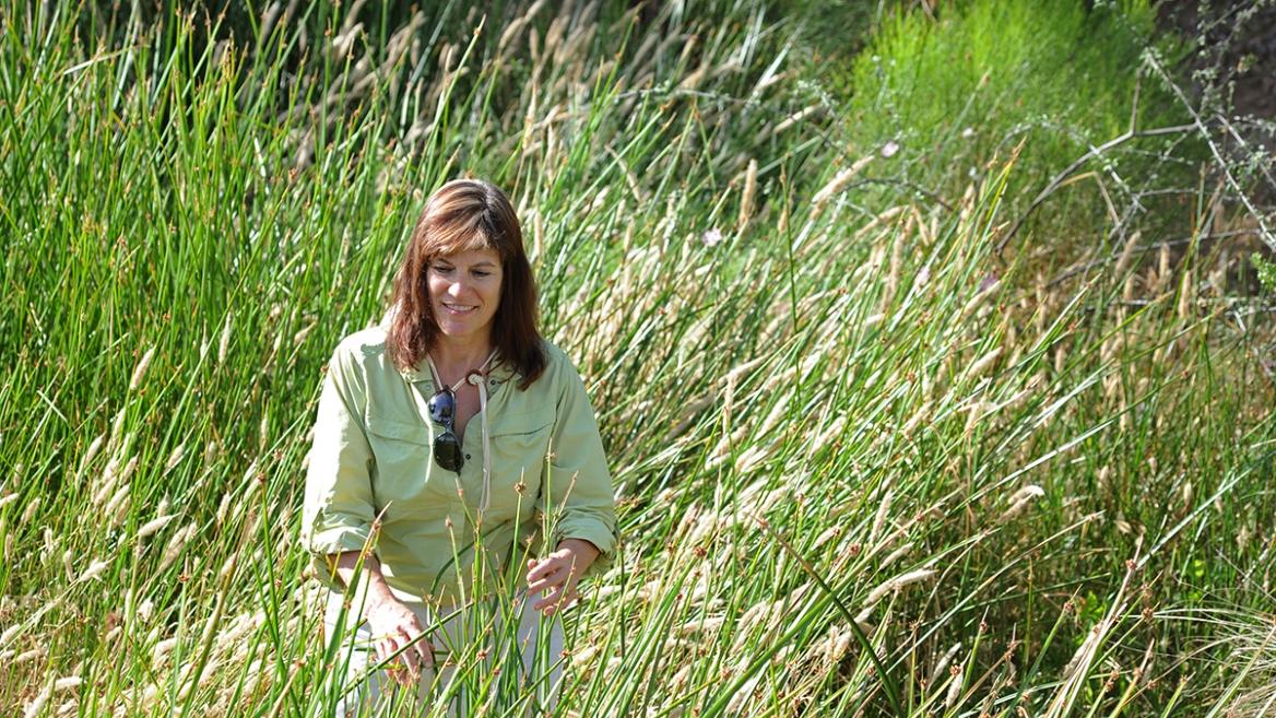 ASU ecologist Nancy Grimm