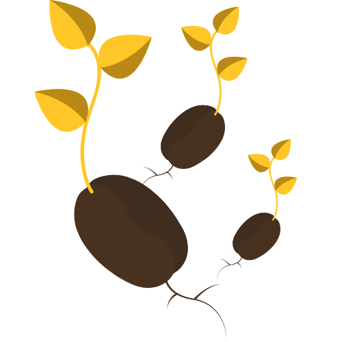 gold-sprouts