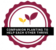 companion planting to help each other logo