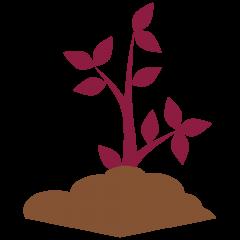maroon-growing-plant